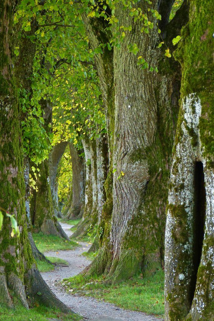 trees-2897757